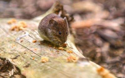Mäuse abwehren