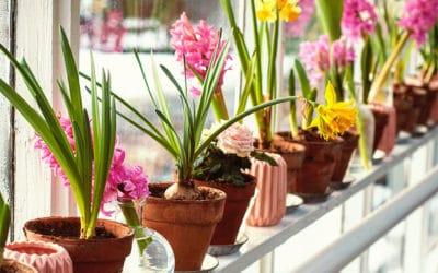 Blumenzwiebeln für den Balkon