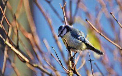 Nützliche Vögel