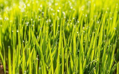 Tipps für die erfolgreiche Rasenpflege