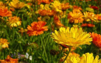 Sommerblumen direkt aussäen