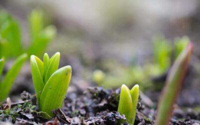Jetzt den Frühling pflanzen